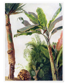 Póster  Banana Tree - Frederic Edwin Church