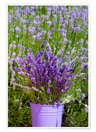 Póster  Lavender in metal bucket - Thomas Klee