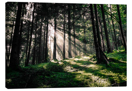 Lienzo  Light rays in the forest - Oliver Henze