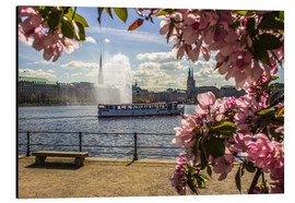 Cuadro de aluminio  Cherry on the Alster in Hamburg for Spring - Dennis Stracke