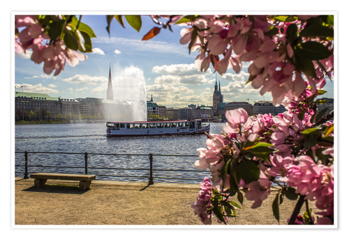 Póster Cherry on the Alster in Hamburg for Spring