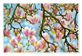Póster Magnolias look in the Spring