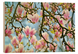 Madera  Magnolias look in the Spring - Julia Delgado
