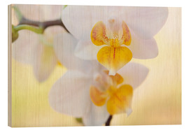 Madera  White orchids against soft yellow background - Julia Delgado