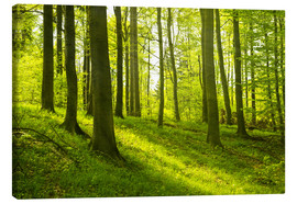 Lienzo  Magical beech forest - Oliver Henze