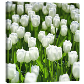 Lienzo  Meadow of tulips - pixelliebe