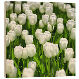 Cuadro de madera  Meadow of tulips - pixelliebe
