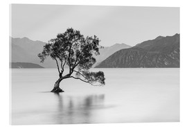 Cuadro de metacrilato  Lone Tree / black & white - Sebastian Warneke