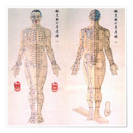 Póster  Acupuncture Map of the male body