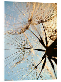 Cuadro de metacrilato  Look at dandelion from below - Julia Delgado
