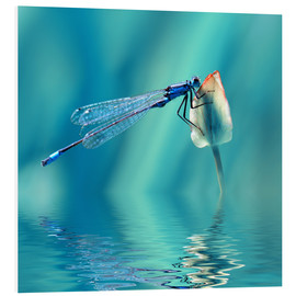 Cuadro de PVC  Dragonfly with Reflection - Atteloi