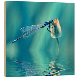 Cuadro de madera  Dragonfly with Reflection - Atteloi