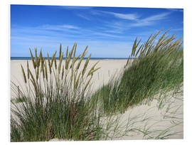 Cuadro de PVC  thriving beach grass in the dunes - Susanne Herppich