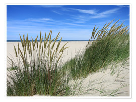Póster  thriving beach grass in the dunes - Susanne Herppich
