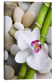 Lienzo  Bamboo and orchid - Andrea Haase Foto