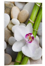 Cuadro de PVC  Bamboo and orchid - Andrea Haase Foto