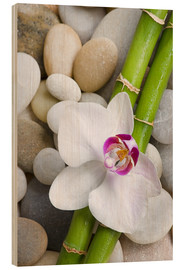 Cuadro de madera  Bamboo and orchid - Andrea Haase Foto