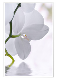 Póster Orchid