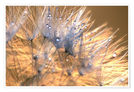 Póster Dandelions Magic Light