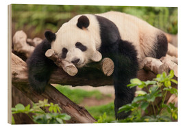 Cuadro de madera  Giant panda sleeping - Jan Christopher Becke
