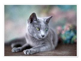 Póster russian blue