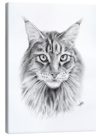 Lienzo  Maine Coon Cat - Christian Klute