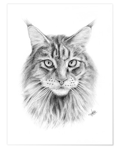 Póster Maine Coon Cat