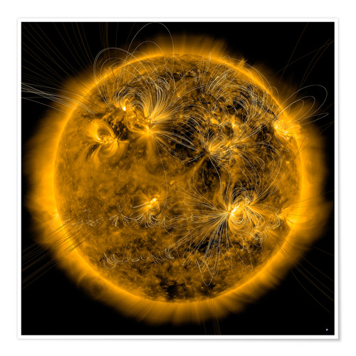 Póster Magnetic field lines on the Sun.