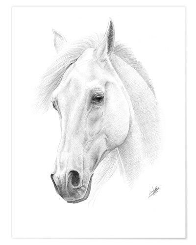 Póster Horse drawing