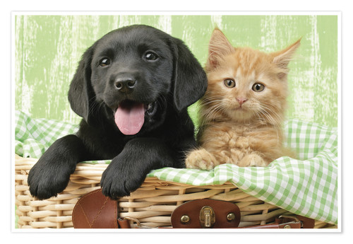 Póster Puppy and kitten in green gingham