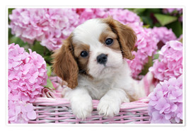 Póster  Pup in Pink Flowers - Greg Cuddiford