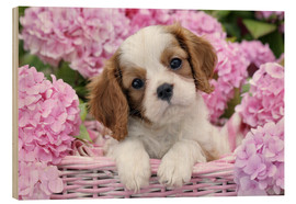 Cuadro de madera  Pup in Pink Flowers - Greg Cuddiford