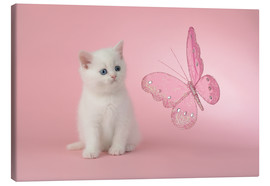Lienzo  Kitten with Pink Butterfly - Greg Cuddiford