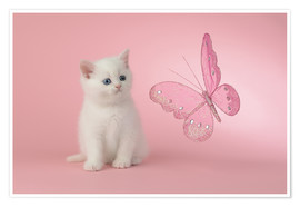 Póster Kitten with Pink Butterfly