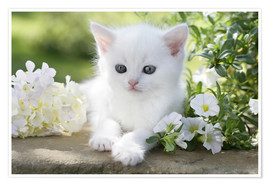 Póster White cat in flowers