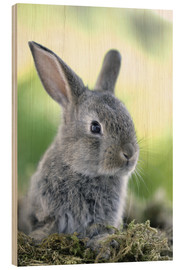 Greg Cuddiford - Grey rabbit