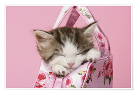 Póster  Sleeping kitten in pink handbag - Greg Cuddiford
