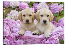 Lienzo  Labrador puppies in a basket - Greg Cuddiford