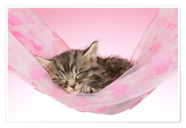 Póster  Sleeping Kitten Hammock - Greg Cuddiford