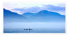 Póster  Three Killer whales in mountain landscape at Vancouver Island - Jürgen Ritterbach