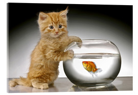 Cuadro de metacrilato  Ginger cat and fishbowl - Greg Cuddiford