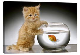 Lienzo  Ginger cat and fishbowl - Greg Cuddiford