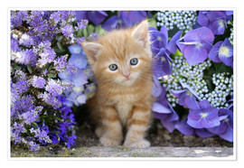 Póster  Ginger cat in flowers - Greg Cuddiford