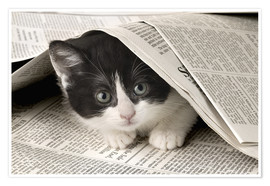 Póster Black and white cat under newspaper