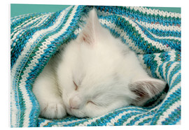 Cuadro de PVC  White kitten sleeping under stripy blanket - Greg Cuddiford