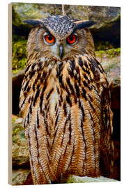 Madera  northern eagle owl - GUGIGEI