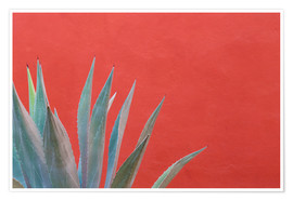 Póster  Agave plant next to colorful wall - Don Paulson