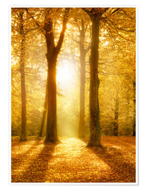 Póster  Golden autumn forest in sunlight - Jan Christopher Becke