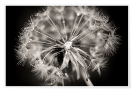 Póster Dandelion modern black and white