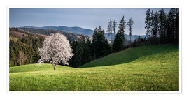Póster  Blooming Apple Tree in Black Forest - Andreas Wonisch